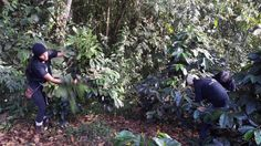 Can Coffee Farms Support Reforestation in Ecuador? Coffee Farm, Ecuador, Agriculture, Farms, Environment, Canning, Plants, Home Canning, The Farm