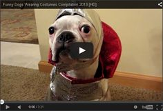 Funny Dogs Wearing Costumes Compilation http://smartandhealthydogs.com/funny-dogs-wearing-costumes-compilation/
