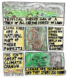 Hey, Tarzan, your vines are messing with our carbon storage