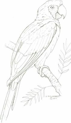 Painting Bird Coloring Pages 67 Ideas Bird Drawings, Pencil Art Drawings, Art Drawings Sketches, Animal Drawings, Drawing Animals, Realistic Drawings, Animal Paintings, Parrot Drawing, Parrot Painting