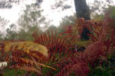 Pontevedra - Tui - Parque Natural Monte Aloia