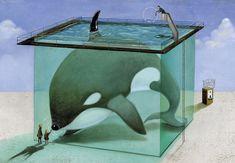 Orca cautiva © Roger Olmos