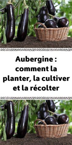 Eggplant how to plant it cultivate it and harvest it Potager Garden, Herb Garden, Garden Landscaping, Comment Planter, Growing Veggies, Garden Maintenance, Vegetable Garden Design, Garden Planning, Horticulture