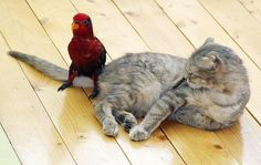 animal, animales, animals, bird, cat, cat bird photo