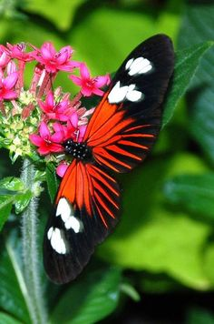 Butterfly, Starburst.Looks pretty.Please check out my website thanks. www.photopix.co.nz