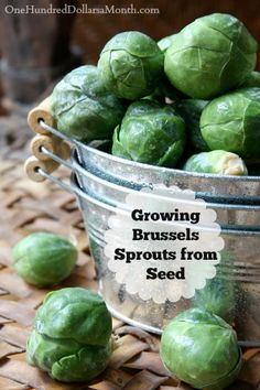 Growing up, we had a neighbor who called Brussels Sprouts Martian heads.  As a kid, I loved and hated that description--it was fun and disgusting.  Now, though, the thought of growing Martian heads makes me smile.  The key, in my humble opinion, is to...