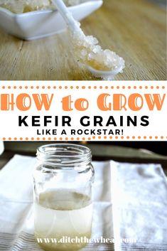 How to Grow Water Kefir Grains Kefir Recipes, Tea Recipes, Smoothie Recipes, Drink Recipes, Summer Recipes, Kefir Benefits, Water Benefits, Probiotic Drinks, Chow Chow