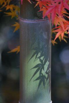 竹取物語-take- bamboo