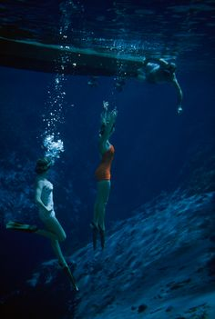 <> A swimmer from a houseboat joins women diving in Weeki Wachee's pristine spring waters in Florida, 1955. PHOTOGRAPH BY BATES LITTLEHALES, NATIONAL GEOGRAPHIC