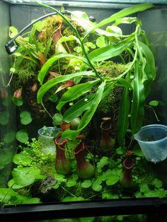 "Zoo Med 18"" x 18"" x 24"" reed frog vivarium"