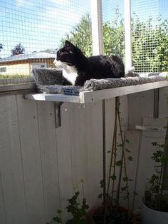 cat shelf on balcony