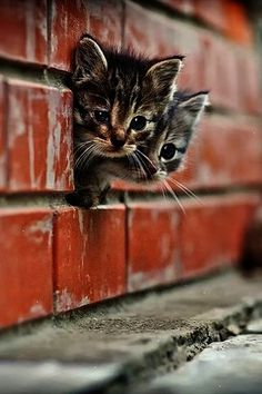 Kittens! So cute!!! :)                                                                                                                                                     More