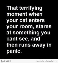 Then you realize that you don't have a cat...:P