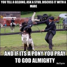You tell a gelding, ask a stud, discuss it with a mare and if it's a pony, you pray to god almighty