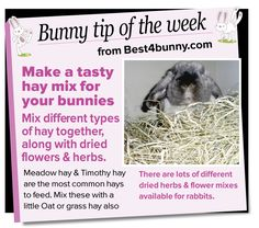 Bunny tip of the week - Make a tasty hay mix www.best4bunny.com