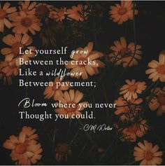 Positive Mental Health, Inspirational Articles, Bloom Where You Are Planted, Were All Mad Here, Life Happens, You Never, Pavement, Mood Quotes, Life Quotes