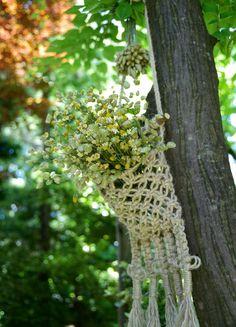 クリ*さんが投稿した画像です。他のクリ*さんの画像も見てませんか?|おすすめの観葉植物や花の名前、ガーデニング雑貨が見つかる!🍀GreenSnap(グリーンスナップ)