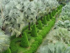 Topiaries and palms in Thailand. By Photigule on flickr.