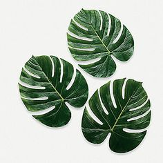 Palm Leaves - These would be fun to layer these on the tables as part of the centerpiece - OTC 12 ct- $8.50