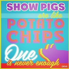 Courtesy of DRIVE. Showpigs are like potatoes chips. Very true!