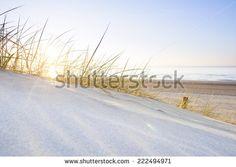 Image ideas. Sea oats Stock Images : Shutterstock.com