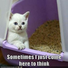 Thinking. #cats #cat