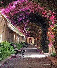 Passage at Jardín de Monforte in #Valencia, Spain.  Alójate en el B&B Mare de Deu Canovas www.bedbreakfastinternational.com