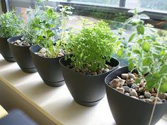 Captain Dapper: Dapper DIY: How to Plant an Indoor Herb Garden
