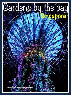 Gardens by the bay, Singapore offer some unique things like vertical gardens and host a vast variety of floura. Which makes them a must visit when in Singapore. Read to know all the details of this place. Singapore Travel Tips, Singapore Trip, Malaysia Travel, China Travel, Japan Travel, Travel Guides, Travel Info, Gardens By The Bay, Bhutan