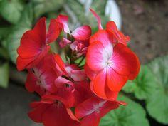Cómo mejorar el aspecto de las plantas con flor | Cuidar de tus plantas es facilisimo.com