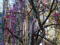 new orleans beads - you will see them everywhere, on bushes trees balconies and in just about every shop in the French quarter, hanging in rows of colors and of different sizes. (so the other shops are pretty much bars, various kinds of sex stores, or voodoo!)
