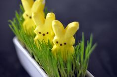 Wheatgrass for Easter and Spring...how-to grow it...