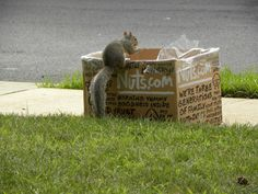 "Tom Hughes from Manassas, VA, writes: ""Our Neighborhood Squirrels love Nuts.com."" May you enjoy your snacks as happily as this little cutie does! #pets #animals"