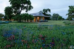 Bluebonnets and Indian paintbrush flowers brighten the grounds of Prairie Chapel Ranch, Laura and George W. Bush's residence in Crawford, Texas; architect David Heymann conceived the house, Kenneth Blasingame Design oversaw the interiors, and the landscaping was done with Michael Williams