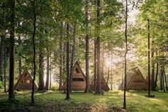 forest camp - Google Search Forest Camp, Camping, Google Search, Plants, Campsite, Plant, Campers, Tent Camping, Rv Camping