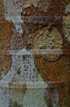 Bark bands abstract; Daintree Rainforest; Cape Tribulation Wilderness; Queensland, Australia. January 2014.