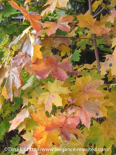 Autumn Photos, Autumn Colours, Helsinki, Finland, In This Moment, Amazing, Painting, Travel, Life
