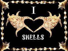 colección de trabajos digitales con fotos personales de conchas marinas en busca de crear efectos que cambien su concepto