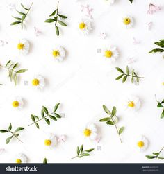 floral frame with chamomile flower and green branches. Flat lay, top view