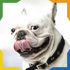 ¿Sabías que? Los perros pueden hacer 100 diferenrtes expresiones faciales. La mayoría las hacen con las orejas.