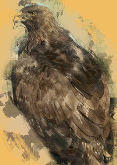 Nova, the Golden Eagle Print by WhiteDogTeamSpirit on Etsy