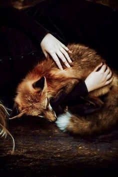 lovely fox portrait