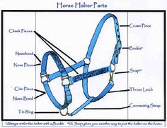 Chart with the various parts of horse halters