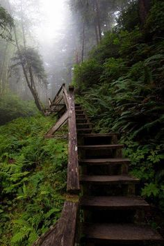 Pacific Rim National Park Reserve is a Forest in BC. Plan your road trip to Pacific Rim National Park Reserve in BC with Roadtrippers. Pacific Rim, Pacific Northwest, The Places Youll Go, Places To See, Columbia Outdoor, Canada Travel, Canada Canada, Canada Trip, Belleza Natural