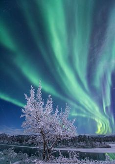 Intense green aurora danced across the northern skies on Sunday (Photos) - The Washington Post Sunday Photos, Natural Phenomena, Beautiful Sky, Science And Nature, Nature Pictures, Belle Photo, Night Skies, Nature Photography, Landscape Photography