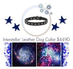 """""Starred"" Leather Dog Collar"" by fordogtrainers ❤ liked on Polyvore featuring art"