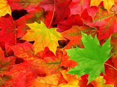 Fall Leaves…. Family Fun! – Lake Area Discovery Center