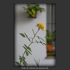 02012013-DSC_0774-12ch by Sofía Serra, via Flickr