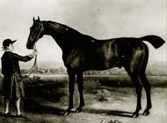 Herod: 1758 stallion who brought forward the blood of both the Byerly Turk & the Darley Arabian.