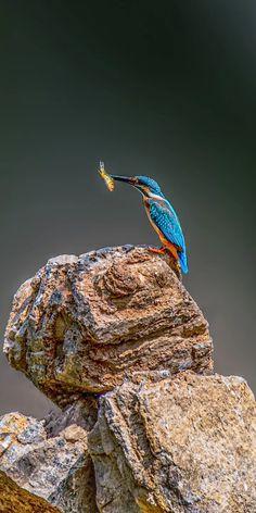 Amazing Nature, Animal Kingdom, Birds, Wallpaper, Pictures, Animals, Photos, Animales, Animaux